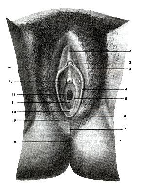 http://med.claw.ru/Book7/233.jpg